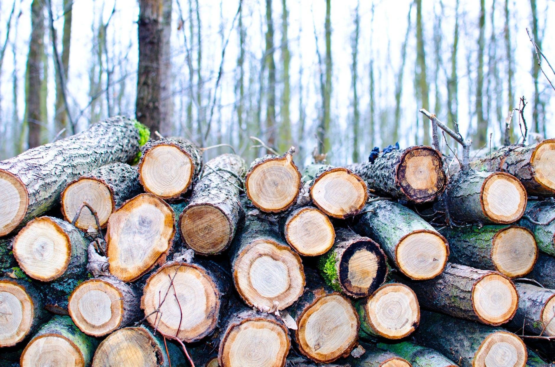Спасти нельзя срубить. Где поставить запятую в вопросе украинских лесов? — Центр гражданского мониторинга и контроля